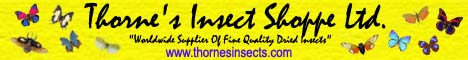 Thornes_Insect_Shoppe_Ltd_Banner.jpg